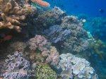 464_Hatta-2ab_Soft-Corals_20141125_IMG_8074.jpg