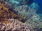 465_Hatta-2ab_Corals_20141125_IMG_8079.jpg