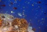 497_Hatta-2d_Napoleonfish_20141126_IMG_8154.jpg