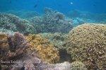 560_Hatta-2g_Corals_20141201_IMG_9645.jpg