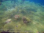 Indo_Bandas_561_Hatta-2g_TableCoral-PyramidButterflyfish_20141130_IMG_9467