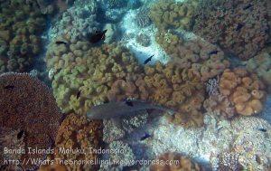 580_Hatta-2g_Blacktip-Reef-Shark_20141130_IMG_9550.jpg