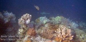 581_Hatta-2g_Blacktip-Reef-Shark_20141130_IMG_9584.jpg