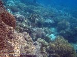 618_Hatta-3cd_Coral_20141128_IMG_8959.jpg