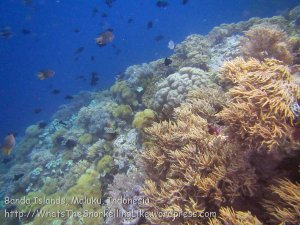 712_Rhun-1e_Corals_20141202_IMG_9742.jpg