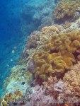 714_Rhun-1e2a_Corals_20141202_IMG_9747.jpg