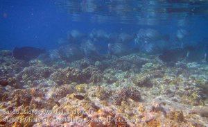 716_Rhun-1e2a_Corals_20141202_IMG_9773.jpg