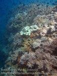 717_Rhun-1e2a_Corals_20141202_IMG_9751.jpg