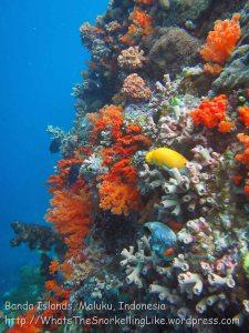 718_Rhun-1e2a_Corals_20141203_IMG_9857.jpg