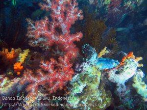 719_Rhun-1e2a_Corals_20141202_IMG_9752.jpg
