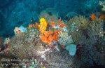 720_Rhun-1e2a_Corals_20141202_IMG_9755.jpg
