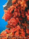 721_Rhun-1e2a_Corals_20141202_IMG_9780.jpg