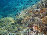 723_Rhun-1e2a_Corals_20141202_IMG_9765.jpg