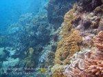 724_Rhun-1e2a_Corals_20141203_IMG_9872.jpg
