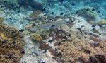 732_Rhun-2bc_Blacktip-Reef-Shark_20141203_IMG_9873.jpg