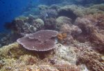 742_Rhun-3ab_Corals_20141203_IMG_9931.jpg