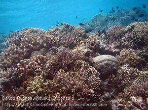 743_Rhun-3ab_Corals_20141203_IMG_9934.jpg