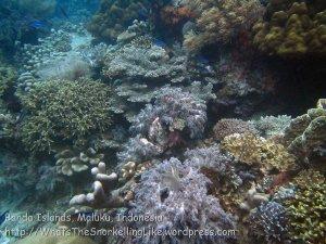 749_rhun-3c_corals_20141203_img_9958.jpg