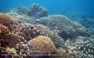 751_Rhun-3c_Corals_20141203_IMG_9964.jpg