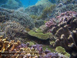 753_Rhun-3c_Corals_20141203_IMG_9978.jpg