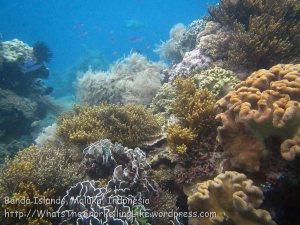 754_Rhun-3c_Corals_20141203_IMG_9980.jpg