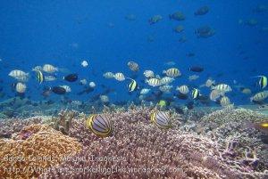 846_Rhun-6c_RA-Moment-Reef-Fishes_20141206_IMG_0336.jpg