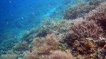 112_Kri-1ab_Better-Corals_20141020_IMG_0293.jpg