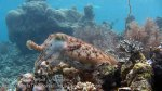 114_Kri-1ab_Cuttlefish_20141020_IMG_0297.jpg