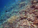 119_Kri-1b_Better-Corals-Nr_Cliff_20141021_IMG_0480.jpg