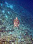 128_Kri-1cd_TurtlenBad-Coral_20141024_IMG_1393.jpg