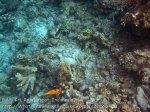 129_Kri-1cd_Poor-Coral_20141023_IMG_1214.jpg