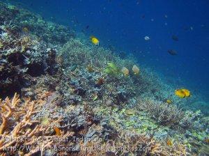 163_Kri-2_YK-Corals_20141022_IMG_0678.jpg