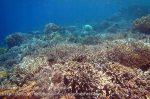 291_Kri-4bc_Corals_20141024_IMG_1253.jpg
