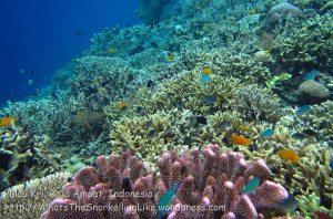 294_Kri-4bc_Corals_20141024_IMG_1295.jpg