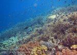 297_Kri-4bc_Corals_20141025_IMG_1545.jpg