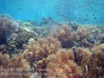 298_Kri-4bc_Corals_20141025_IMG_1559.jpg