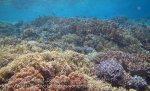 307_Kri-4c5_Corals_20141024_IMG_1321.jpg