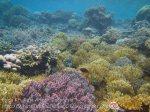 308_Kri-4c5_Corals_20141024_IMG_1337.jpg
