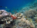 317_Kri-56_LL-Corals_20141025_IMG_1596.jpg