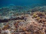 326_Kri-7a_Corals_20141023_IMG_0871.jpg