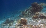 328_Kri-7a_Corals_20141023_IMG_0874.jpg