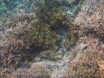 329_Kri-7a_Corals_20141023_IMG_0886.jpg