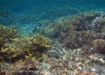 330_Kri-7a_Corals_20141023_IMG_0887.jpg