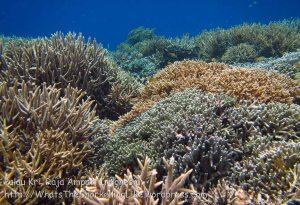 341_Kri-7b_Corals_20141021_IMG_0363.jpg