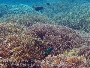 344_Kri-7b_Corals_20141023_IMG_0894.jpg