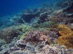347_Kri-7b_Corals_20141027_IMG_1877.jpg