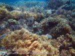 348_Kri-7b_Corals_20141027_IMG_1875.jpg