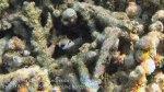 354_Kri-7c_Blackpatch-Triggerfish_20141025_IMG_1709.jpg