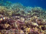 370_Kri-8b_Corals_20141023_IMG_1112.jpg