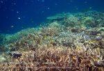 371_Kri-8b_Corals_20141023_IMG_1113.jpg